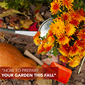 How to Prepare Your Garden this Fall