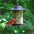 How To Attract Birds To Your Garden Or Yard