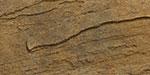 Sahara/Chestnut