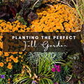 Planting the Perfect Fall Garden